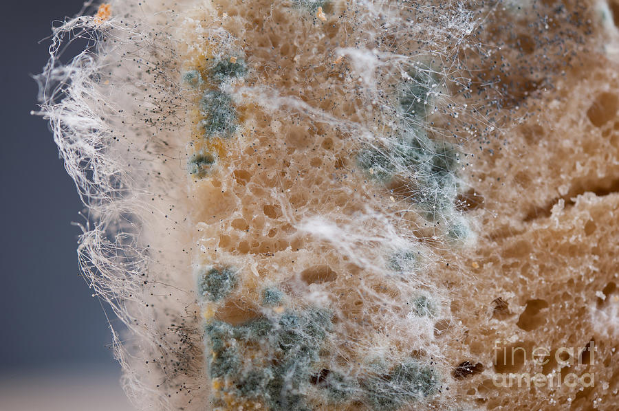 Waste Of Moldy Bread Zoom is a photograph by Arletta Cwalina which was ...