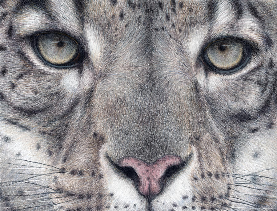 Cats Painting - Watching You...snow Leopard by Pat Erickson