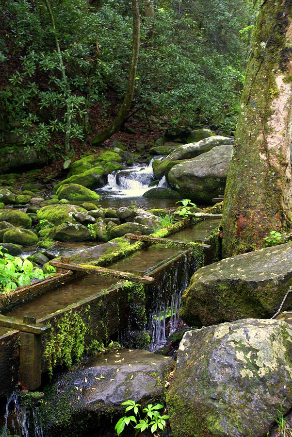 Great Smokey Mountains National Park Photograph - Water Sluice  by Marty Koch