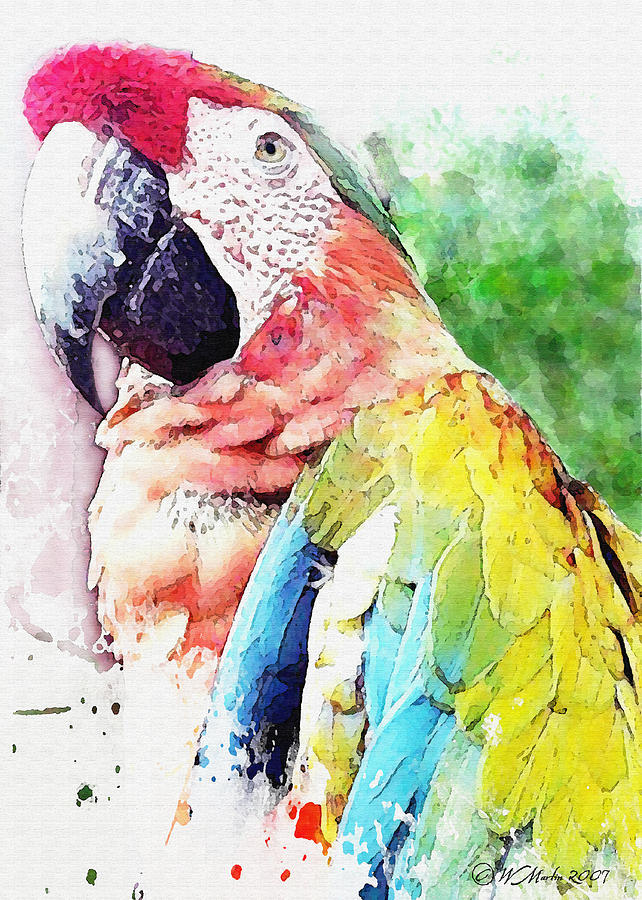 Macaw Painting - Watercolor Macaw by William Martin