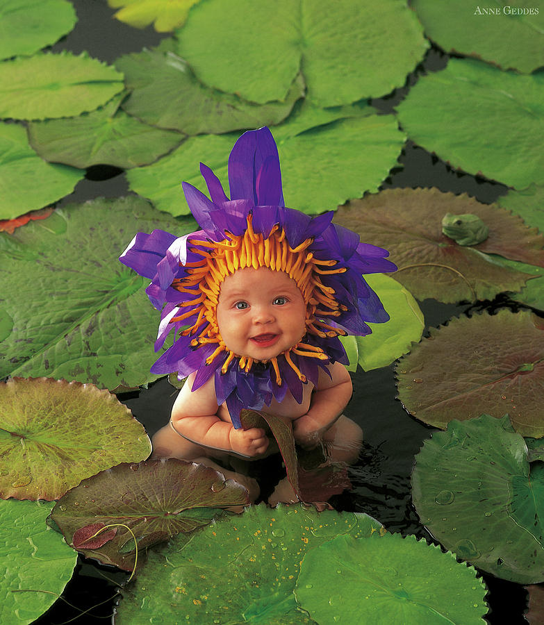 Flower Photograph - Waterlily by Anne Geddes