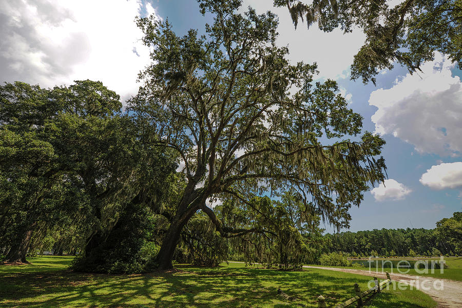 Wealthy Plantation Grounds Photograph