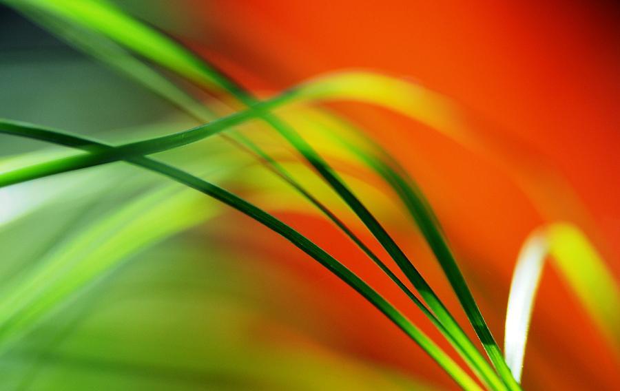 Macro Photograph - Weeds by Catherine Lau