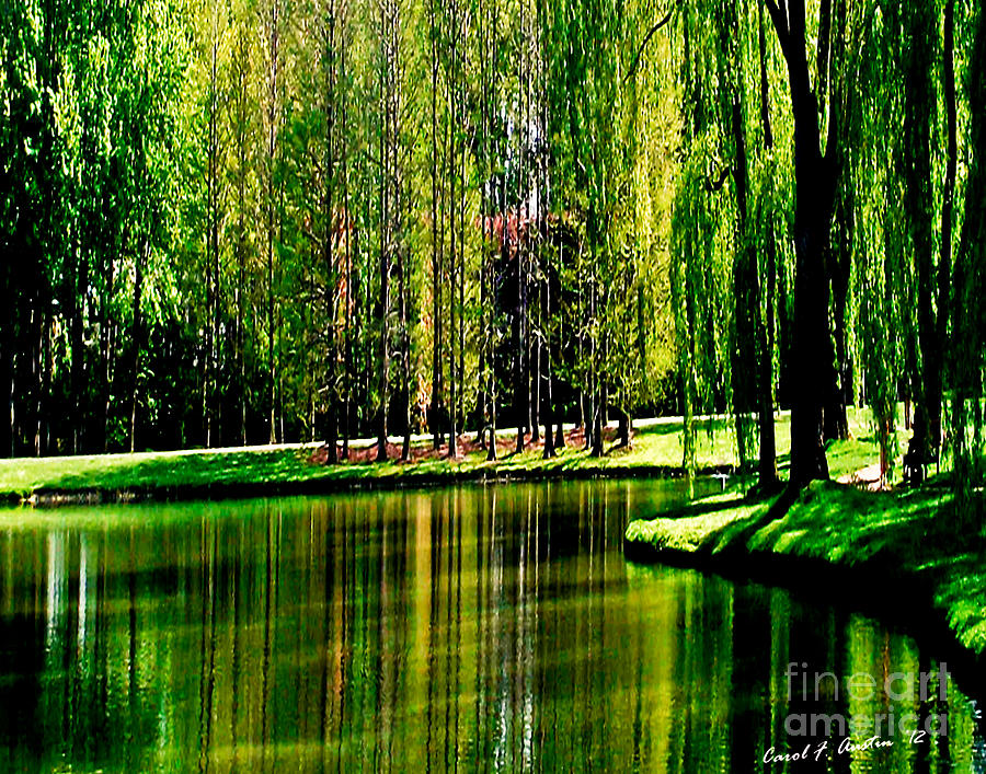 Weeping Willow Tree Photograph - Weeping Willow Tree Reflective Moments by Carol F Austin