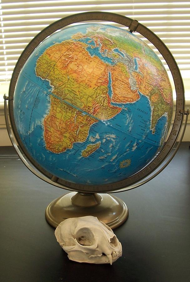 Photo World Photograph - Weight Of The World by Samantha  Gilbert