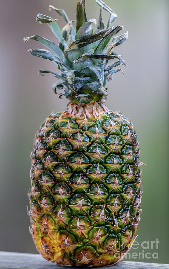 Welcome Home Pineapple Photograph