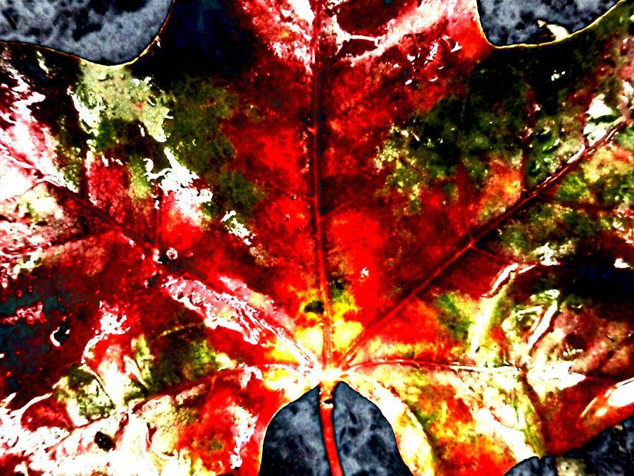 Maple Photograph - Wet Single Leaf by Beth Akerman