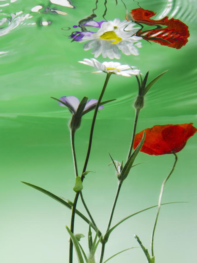 Flower Water Green Wildflower Pyrography - Wet Wild Flower by Han Van Vonno