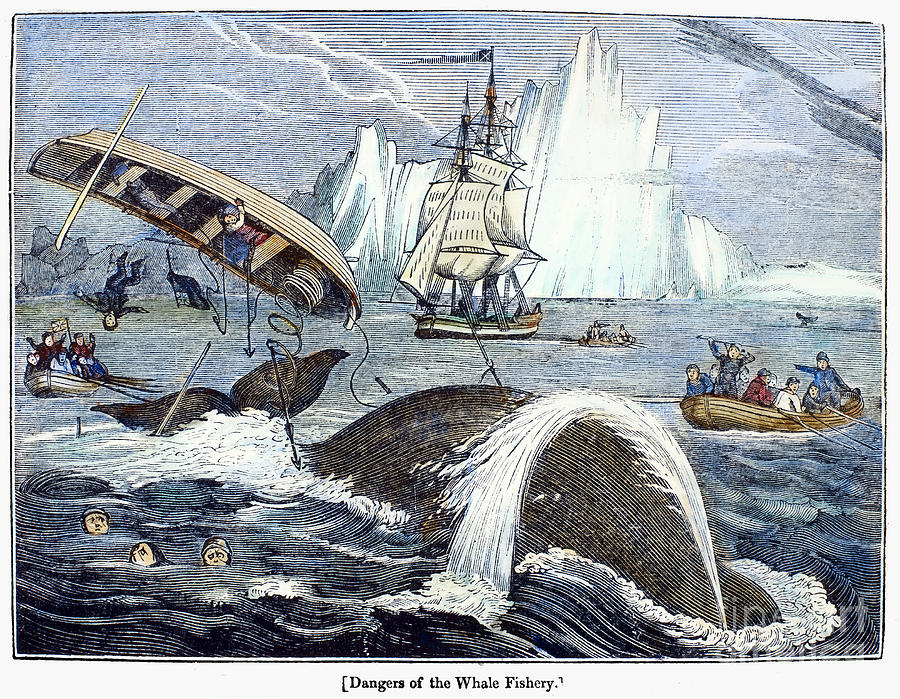 Whaling, 1833 Photograph