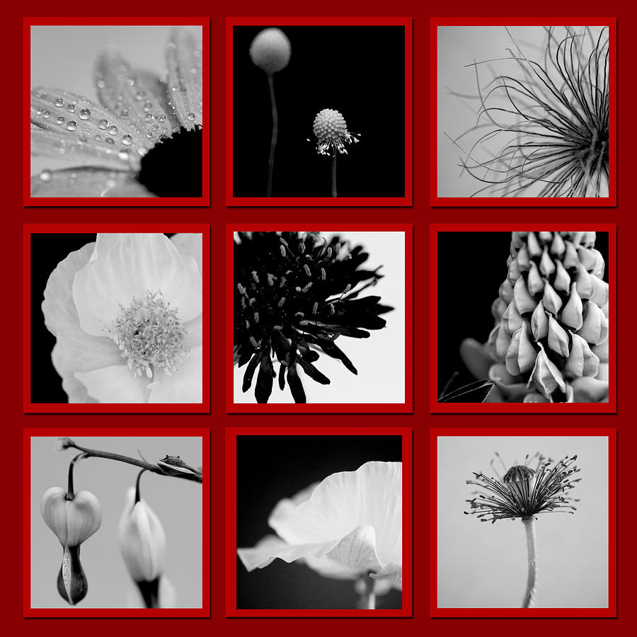 What Is Black And White And Red All Over Photograph