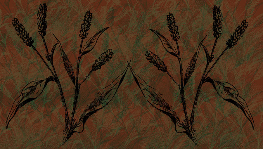 Wheat Field Digital Art
