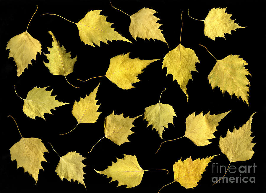Scanography Photograph - When Leaves Grow Old by Christian Slanec
