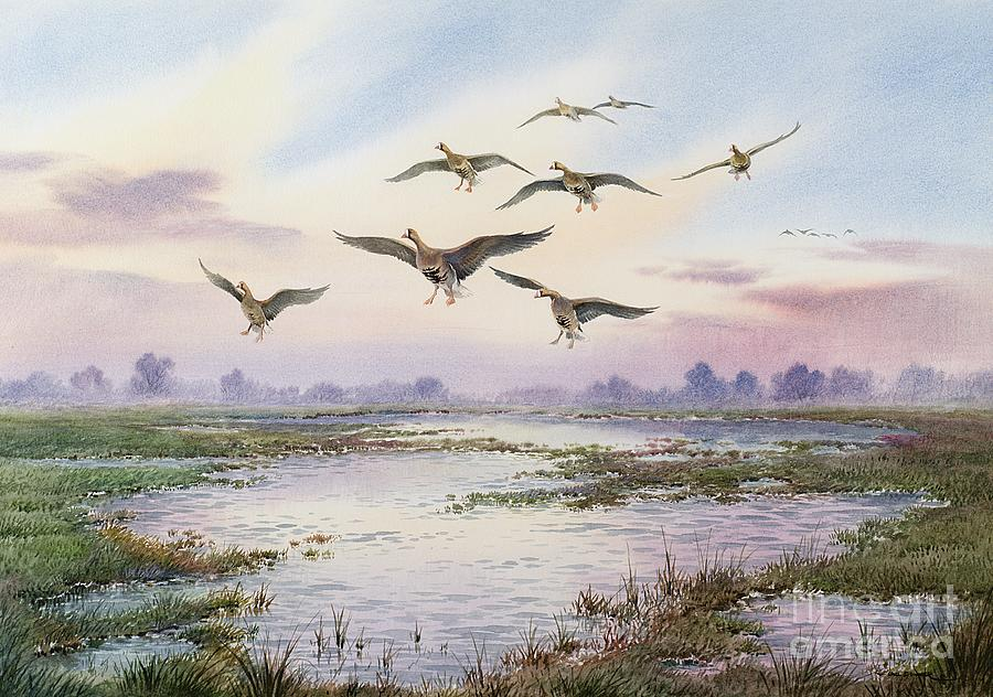 Geese; White-fronted; Marsh; River; Bird Landing; Goose; Landscape; Flying; Water; Grass; Sky; Animals Painting - White-fronted Geese Alighting by Carl Donner