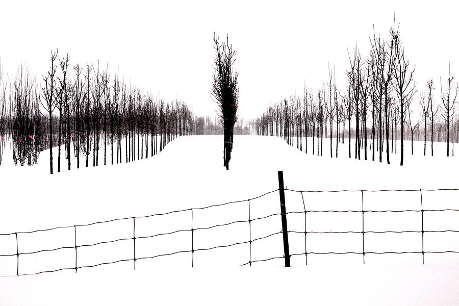 Snow Photograph - White Lines Fenced In  by Russell Styles