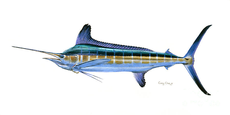 White Marlin Painting - White Marlin by Carey Chen