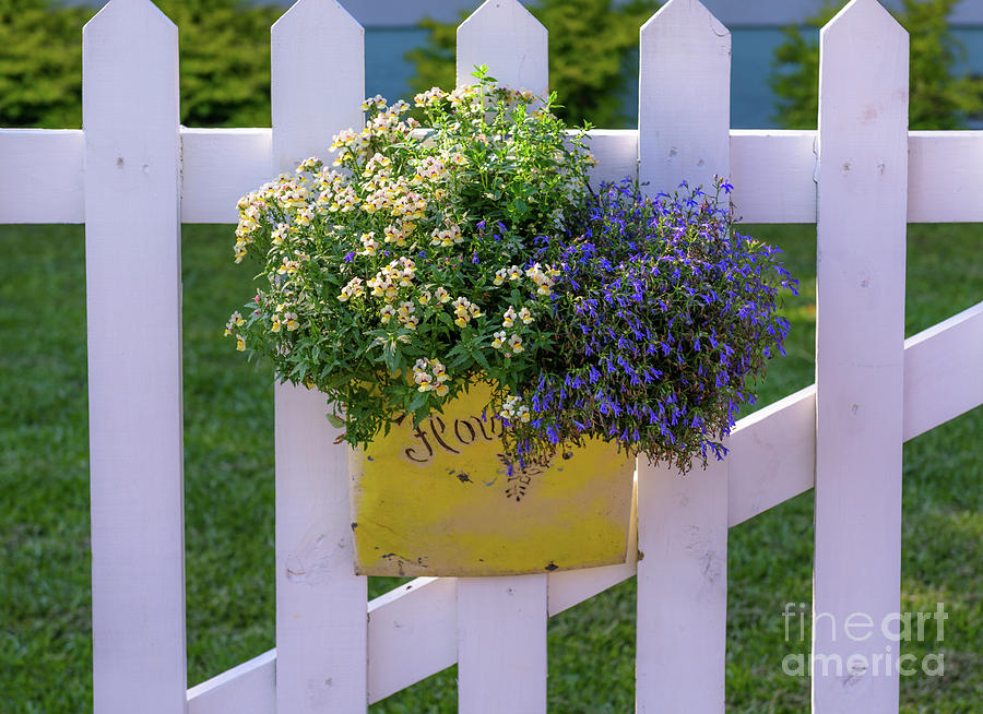 White Picket Fence Flower Basket Photograph
