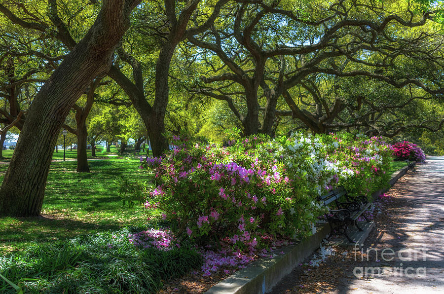 White Point Garden In The Spring Photograph