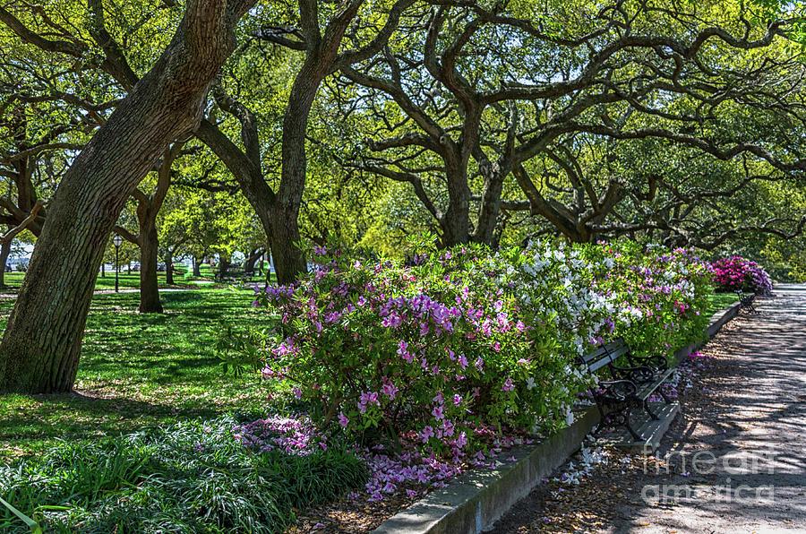 White Point Garden Spring Stroll Photograph