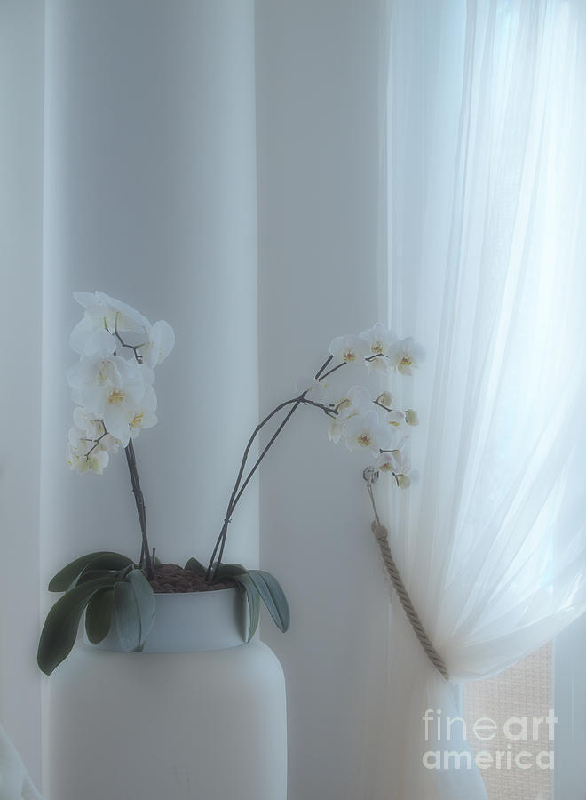 White Orchids Photograph - White Series Soft by Joyce Hutchinson