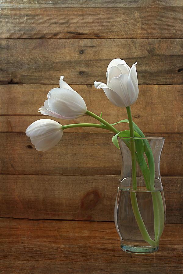 White Tulips In Glass Vase Photograph by Kim Hojnacki