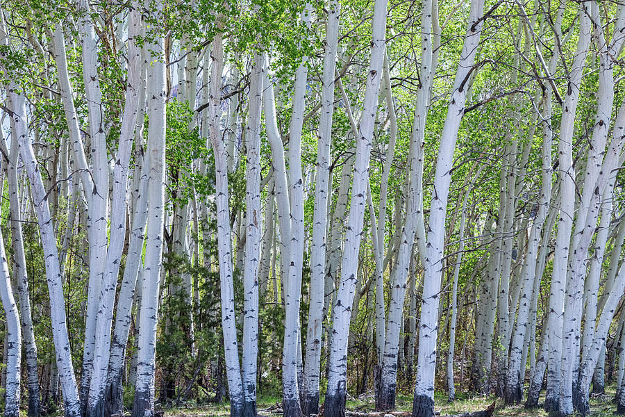 White Wilderness Photograph