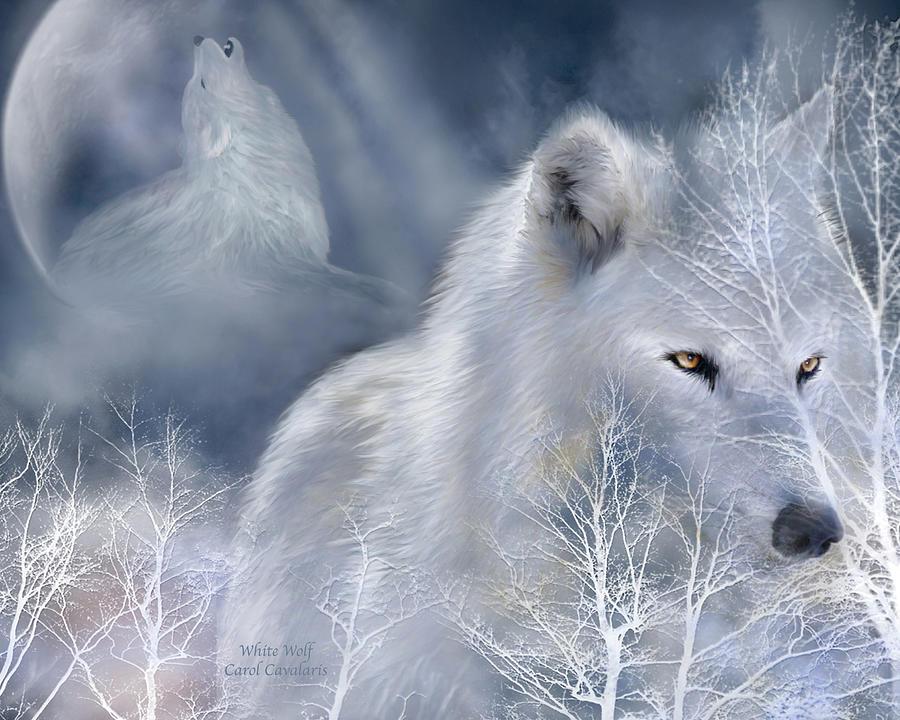 Wolf Art Mixed Media - White Wolf by Carol Cavalaris