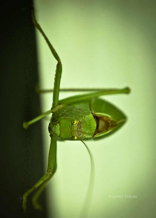 Katydid Photograph - Who Are You Eyeballin by DigiArt Diaries by Vicky B Fuller