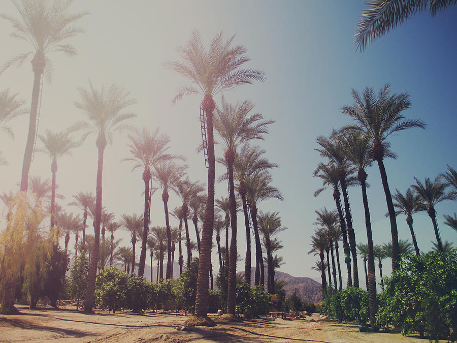 La Quinta Photograph - Wide Awake by Laurie Search