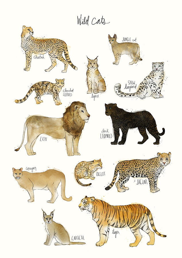 Wild Cats Painting By Amy Hamilton