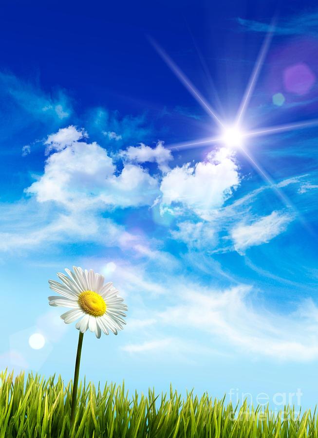 Wild Daisy In The Grass Against Bleu Sky Photograph