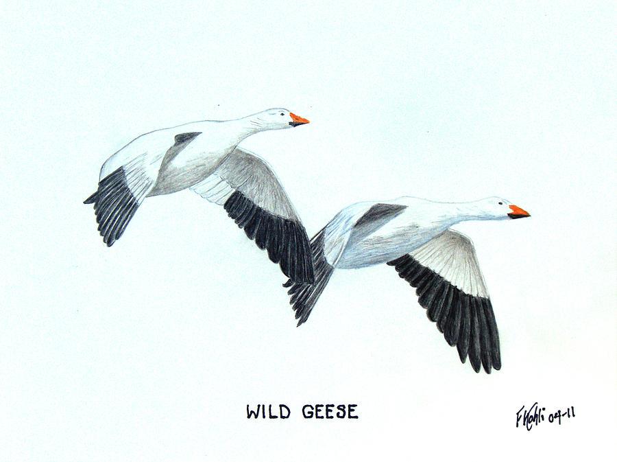 Bird Drawings Drawing - Wild Geese by Frederic Kohli