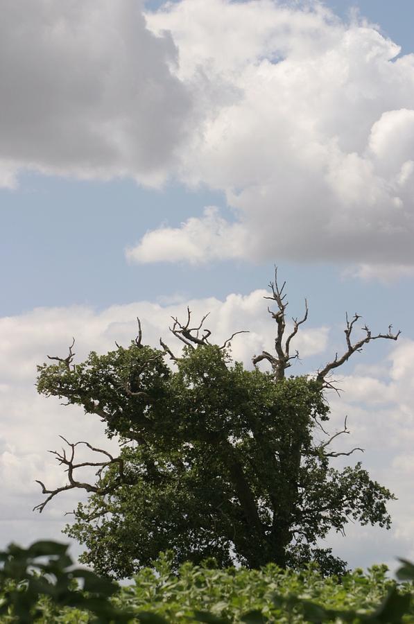 Tree Photograph - Wild Sky by Dagmar Batyahav
