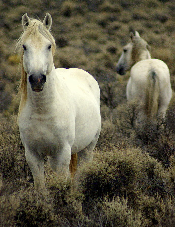 Wild Horses Photograph - Wild Stallion by Marty Koch
