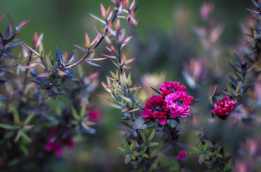 Australia Photograph - Wildflowers On A Cloudy Day by Jade Moon