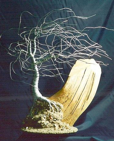 Wind Swept On Driftwood - Wire Tree Sculpture Sculpture