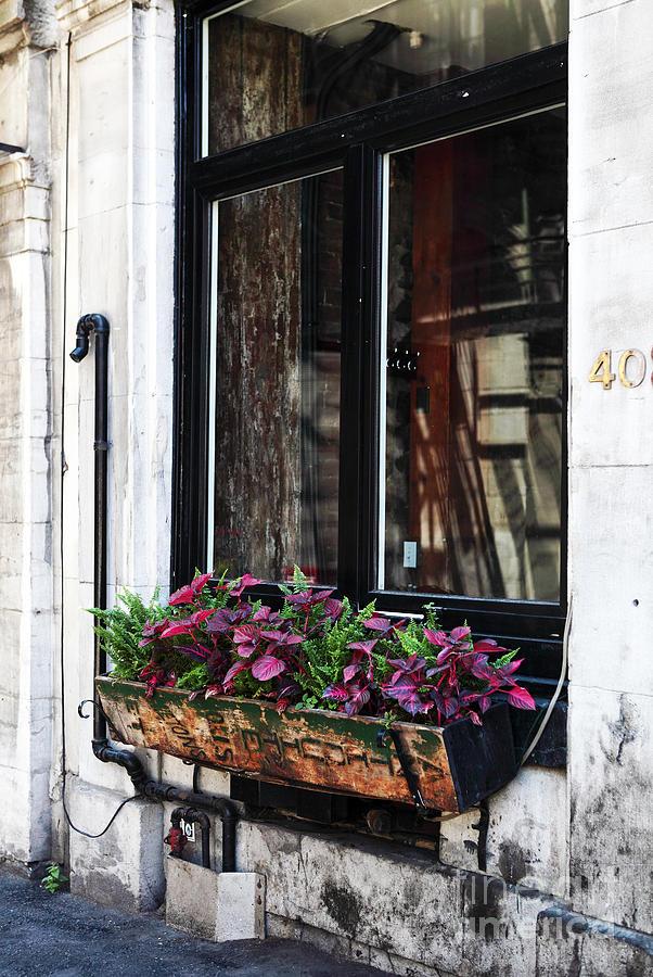 Window Flowers Photograph - Window Flowers by John Rizzuto