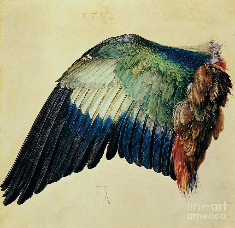 Wing Painting - Wing Of A Blue Roller by Albrecht Durer