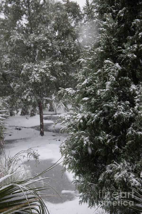 Winter Beauty Photograph