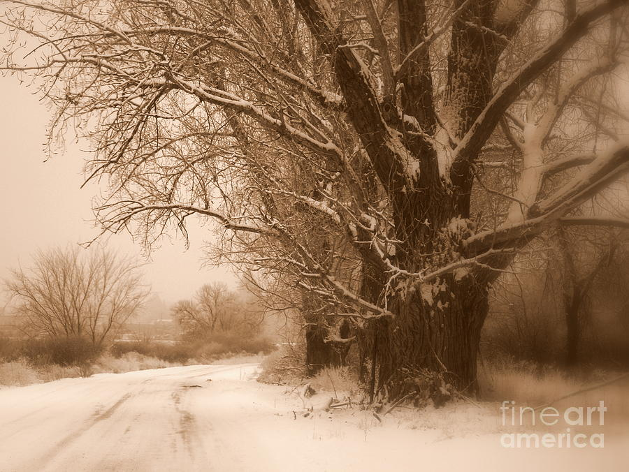 Prosser Photograph - Winter Dream by Carol Groenen