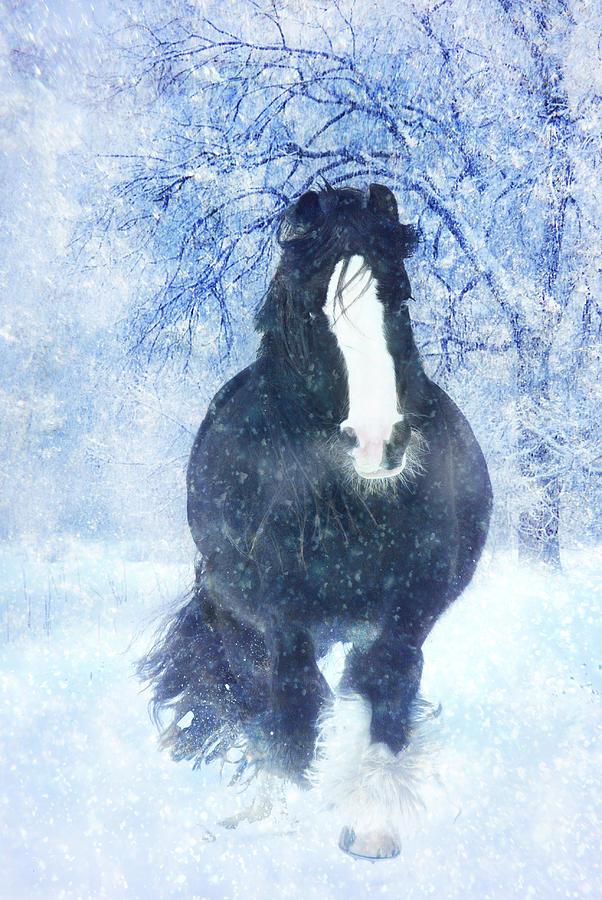 Horses Photographs Photographs Photograph - Winter Faith by Jamie Mammano