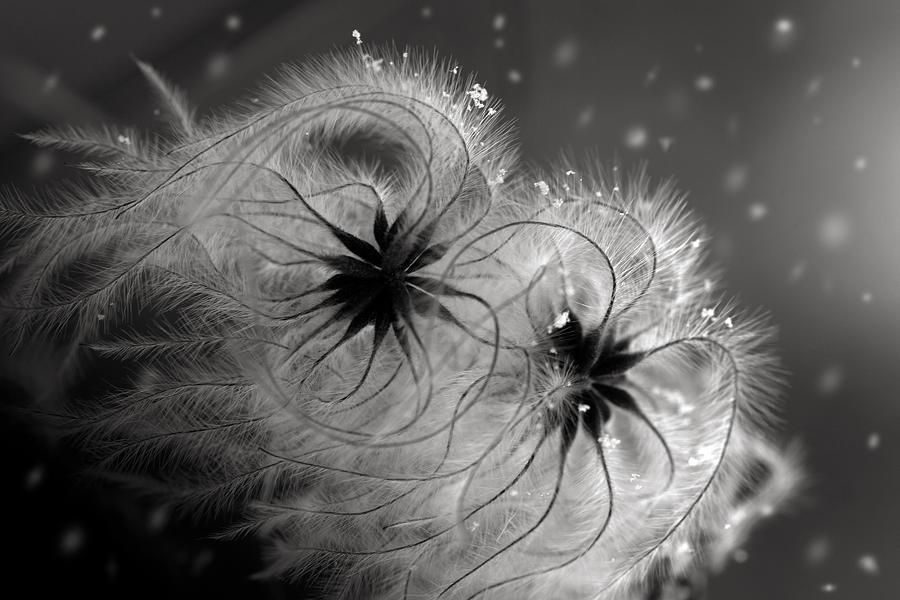 Winter Flower Photograph