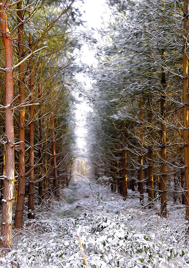 Art Digital Art - Winter Forest by Svetlana Sewell