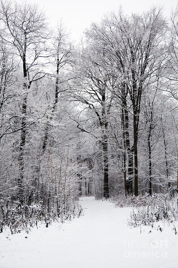 Winter Photograph - Winter In The Forest by Gabriela Insuratelu