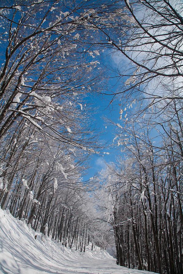 Winter Road Photograph