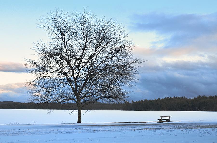 Winter Photograph - Winter by Toshihide Takekoshi