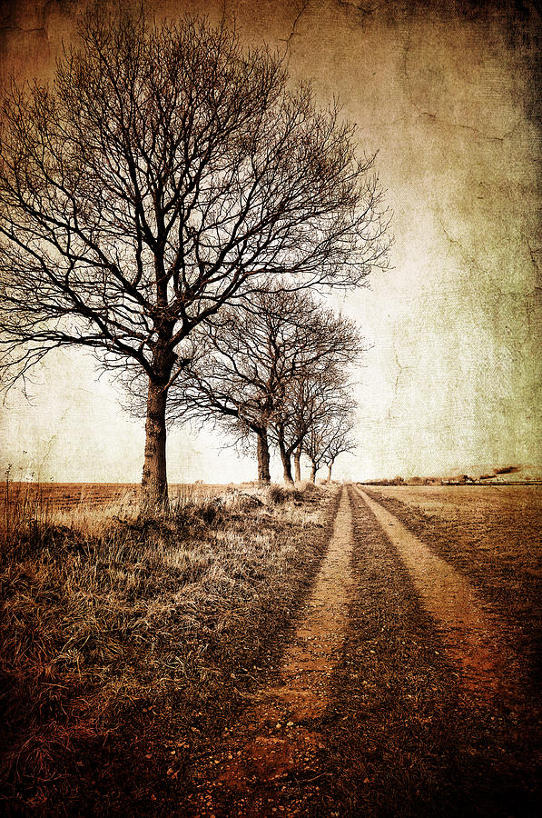 Aged Photograph - Winter Track With Trees by Meirion Matthias