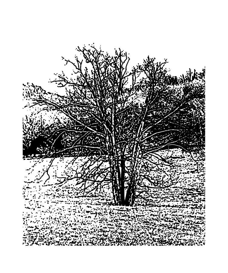 Winter Tree 5 Mixed Media