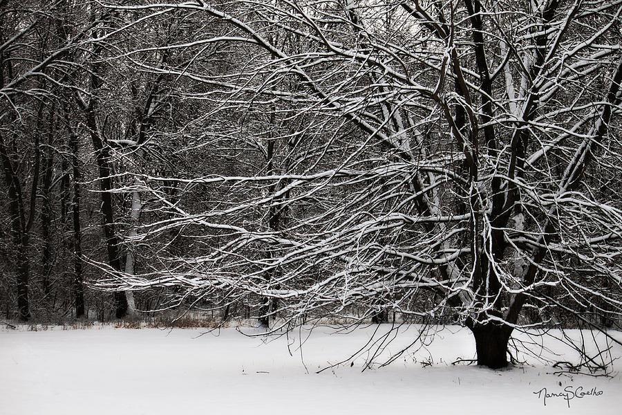 Photograph - Winter Wonderland by Nancy  Coelho