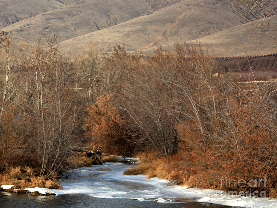 Yakima Photograph - Winter Yakima River With Hills And Orchard by Carol Groenen
