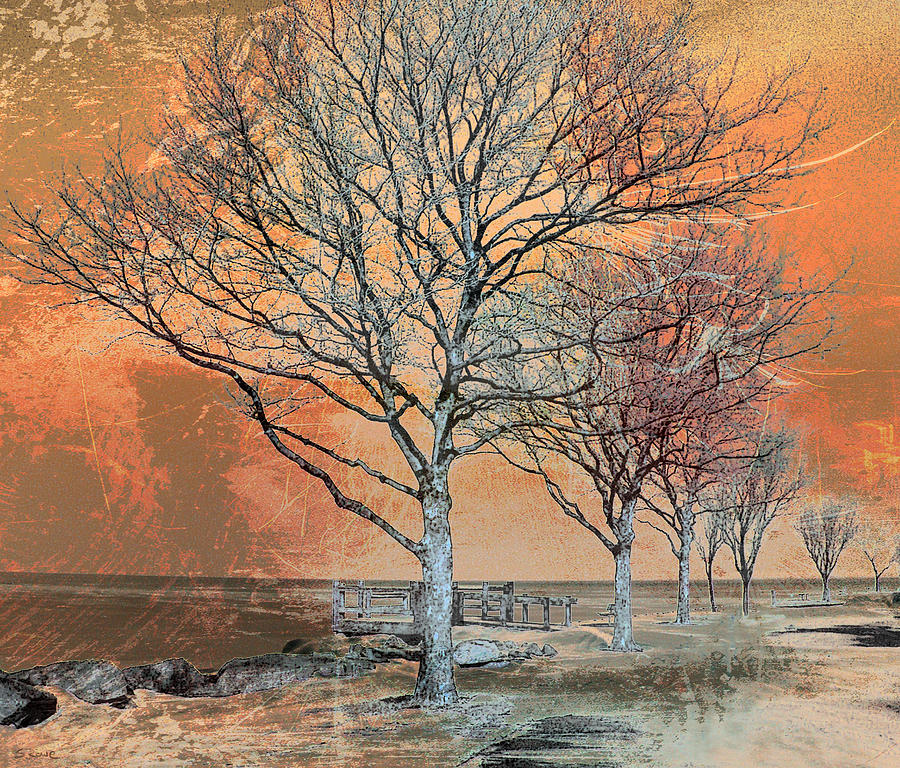 Winter Scene Photograph - Winters Dawn by Shawna  Rowe